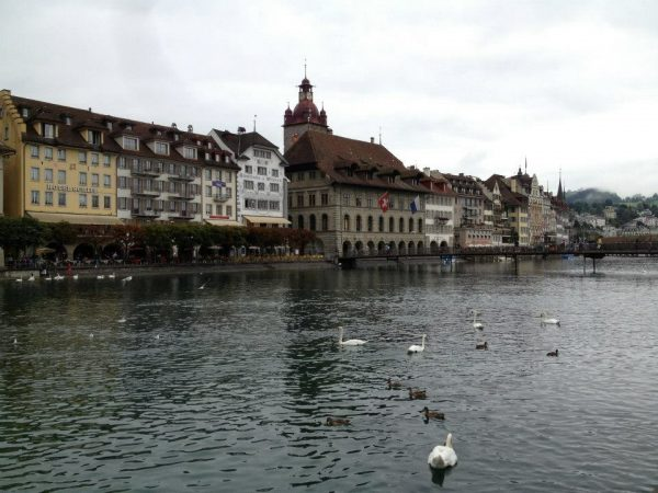 Lake Lucerne lined by a row of buildings on the left bank with a group of ducks waddling away