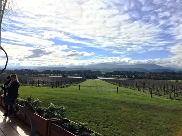 Yarra Valley, a top vineyard in Melbourne