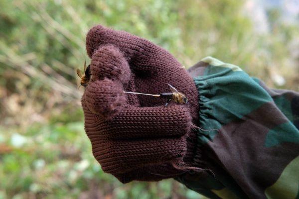 3-honey-hunting-himalayas-mountain-bee