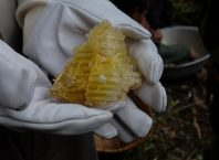 9-honey-hunting-himalayas-mountain-honeycomb