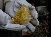 9-honey-hunting-himalayas-mountain-honeycomb