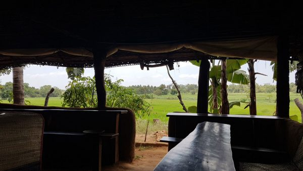 View of padi field from restaurant
