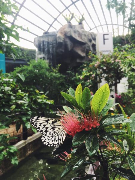 Entopia Butterfly Farm, Penang, Malaysia