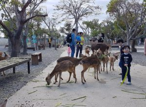 Families feeding deers at Paradise of Deers