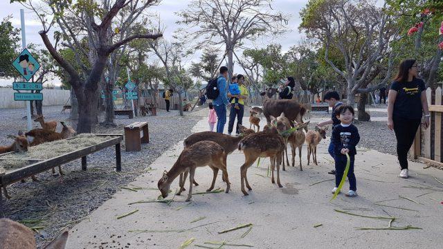 Families feeding deers at Paradise of Deers